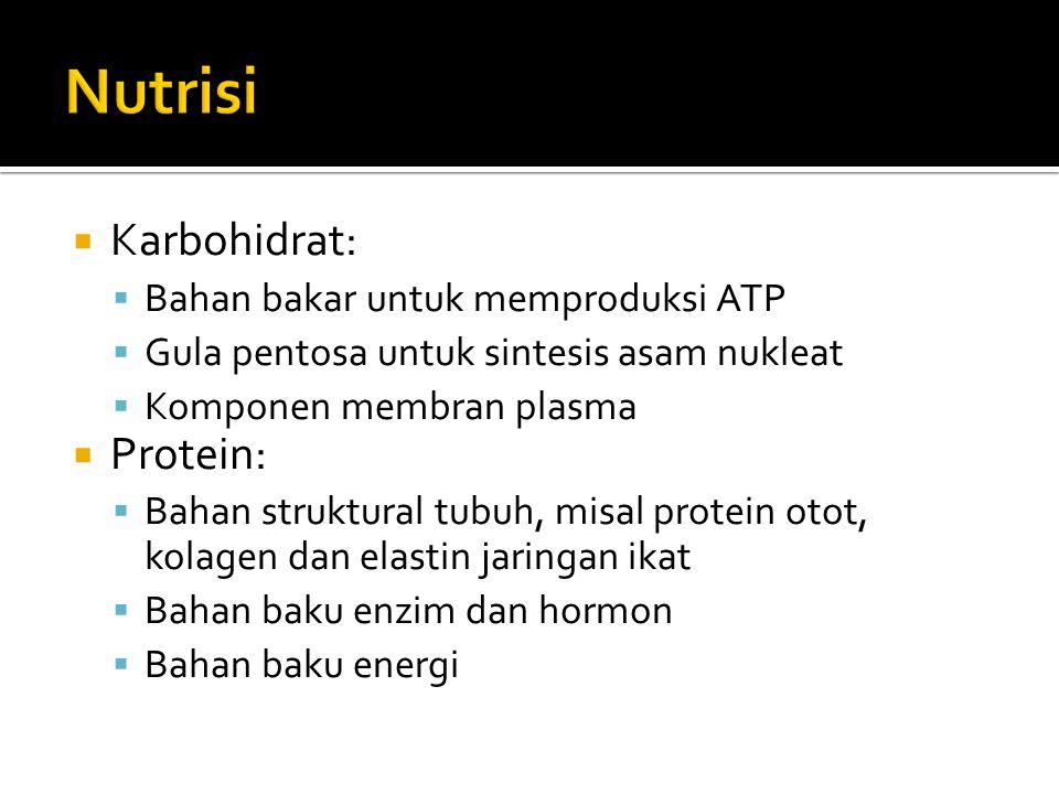  Karbohidrat:  Bahan bakar untuk memproduksi ATP  Gula pentosa untuk sintesis asam nukleat  Komponen membran plasma  Protein:  Bahan struktural