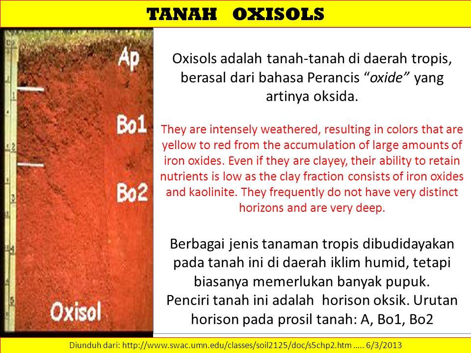 TANAH OXISOLS Diunduh dari: http://www.swac.umn.edu/classes/soil2125/doc/s5chp2.htm …..