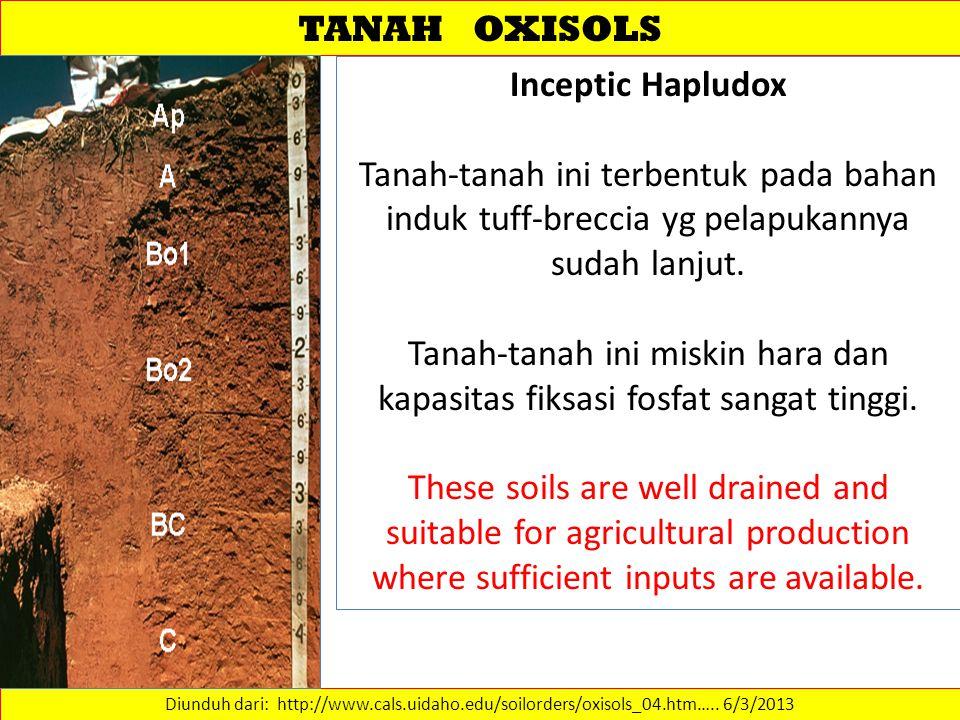 TANAH OXISOLS Diunduh dari: http://www.cals.uidaho.edu/soilorders/oxisols_04.htm…..