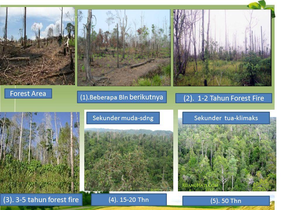 Forest Area (1).Beberapa Bln berikutnya (2). 1-2 Tahun Forest Fire (3). 3-5 tahun forest fire (4). 15-20 Thn (5). 50 Thn Sekunder muda-sdngSekunder tu