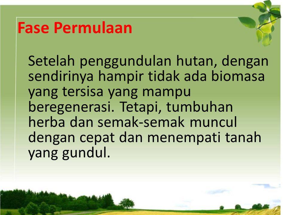 Fase Permulaan Setelah penggundulan hutan, dengan sendirinya hampir tidak ada biomasa yang tersisa yang mampu beregenerasi. Tetapi, tumbuhan herba dan