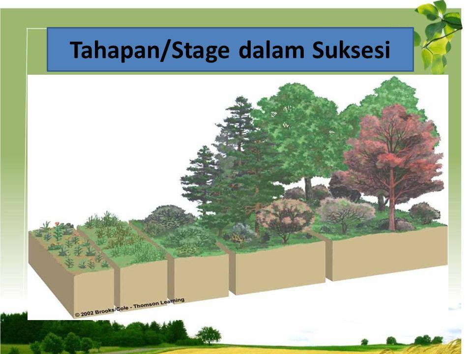 Proses Suksesi Selalu Progressif dalam Kondisi Tanah Dan Life Form