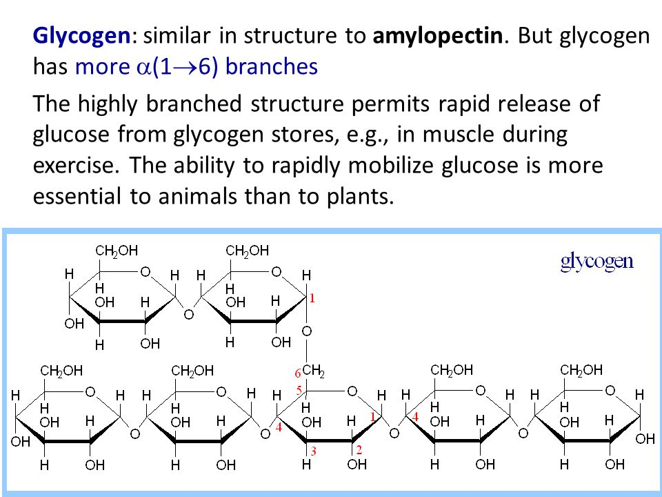 Glycogen: similar in structure to amylopectin.