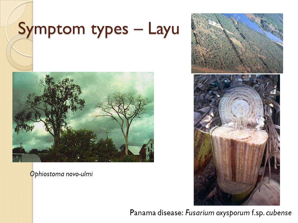 Symptom types – Layu Ophiostoma novo-ulmi Panama disease: Fusarium oxysporum f.sp. cubense