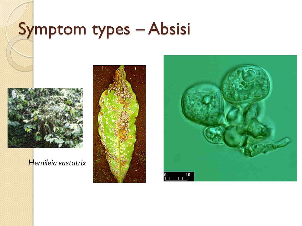 Symptom types – Absisi Hemileia vastatrix