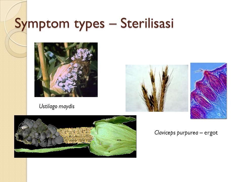 Symptom types – Sterilisasi Claviceps purpurea – ergot Ustilago maydis