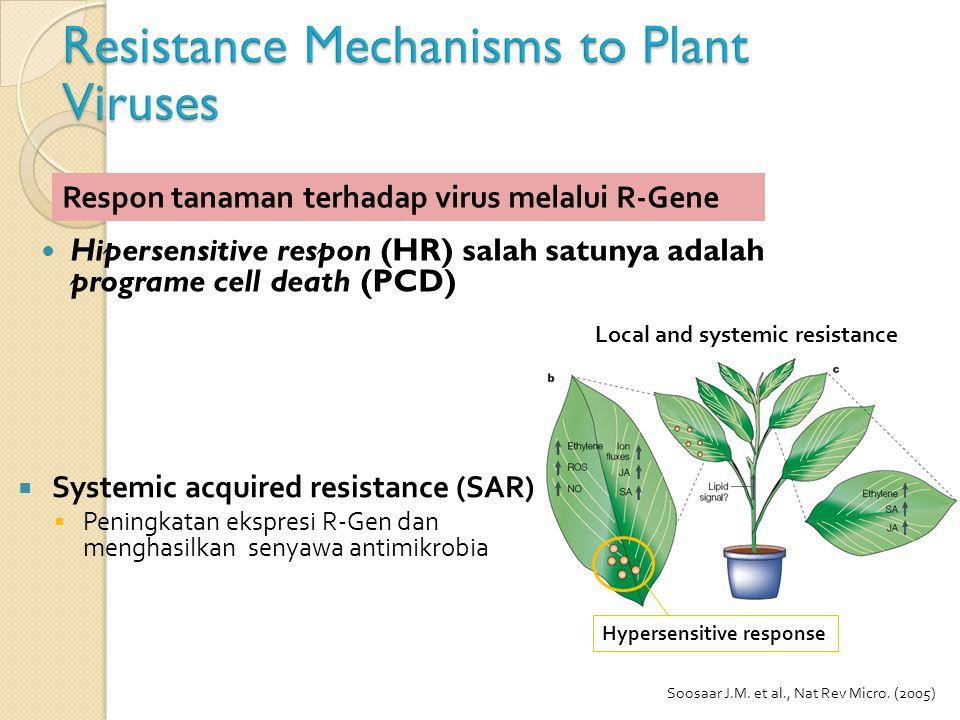 Hipersensitive respon (HR) salah satunya adalah programe cell death (PCD) Respon tanaman terhadap virus melalui R-Gene Soosaar J.M. et al., Nat Rev Mi