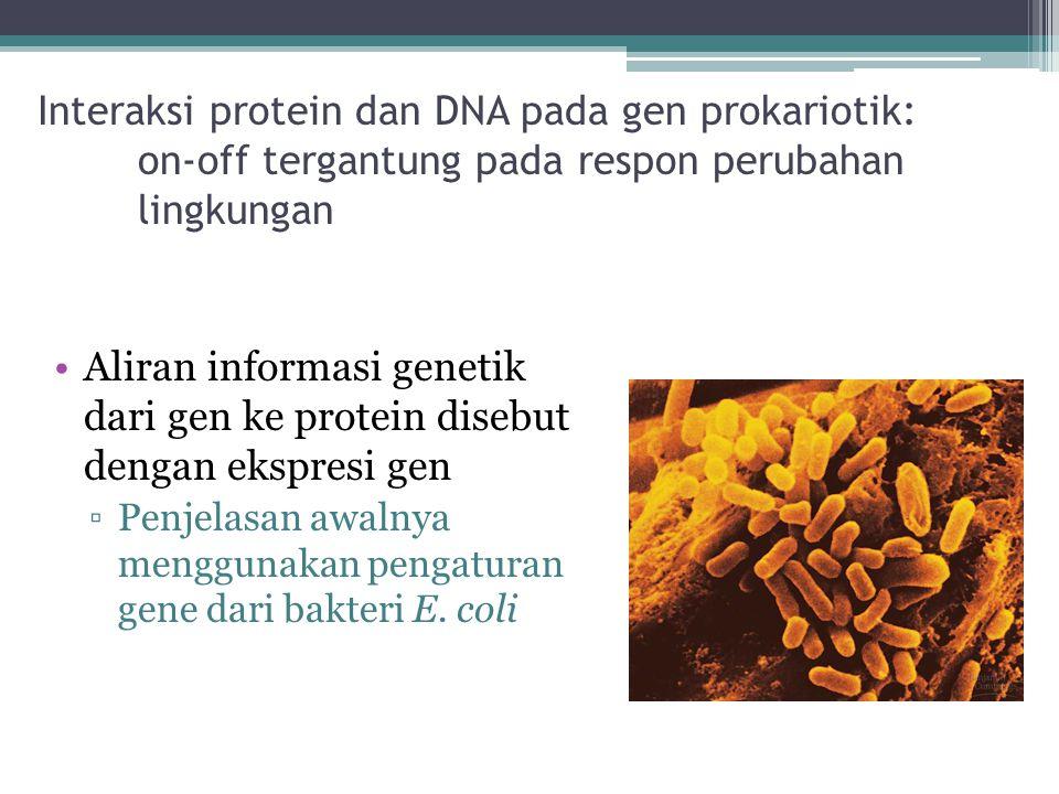 Interaksi protein dan DNA pada gen prokariotik: on-off tergantung pada respon perubahan lingkungan Aliran informasi genetik dari gen ke protein disebu