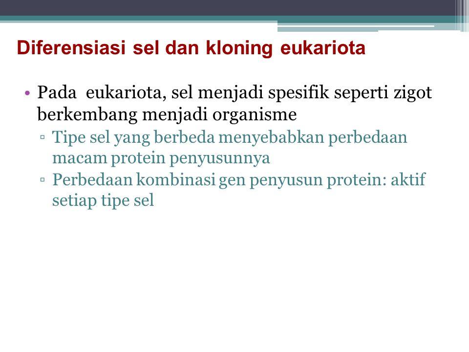 Pada eukariota, sel menjadi spesifik seperti zigot berkembang menjadi organisme ▫Tipe sel yang berbeda menyebabkan perbedaan macam protein penyusunnya