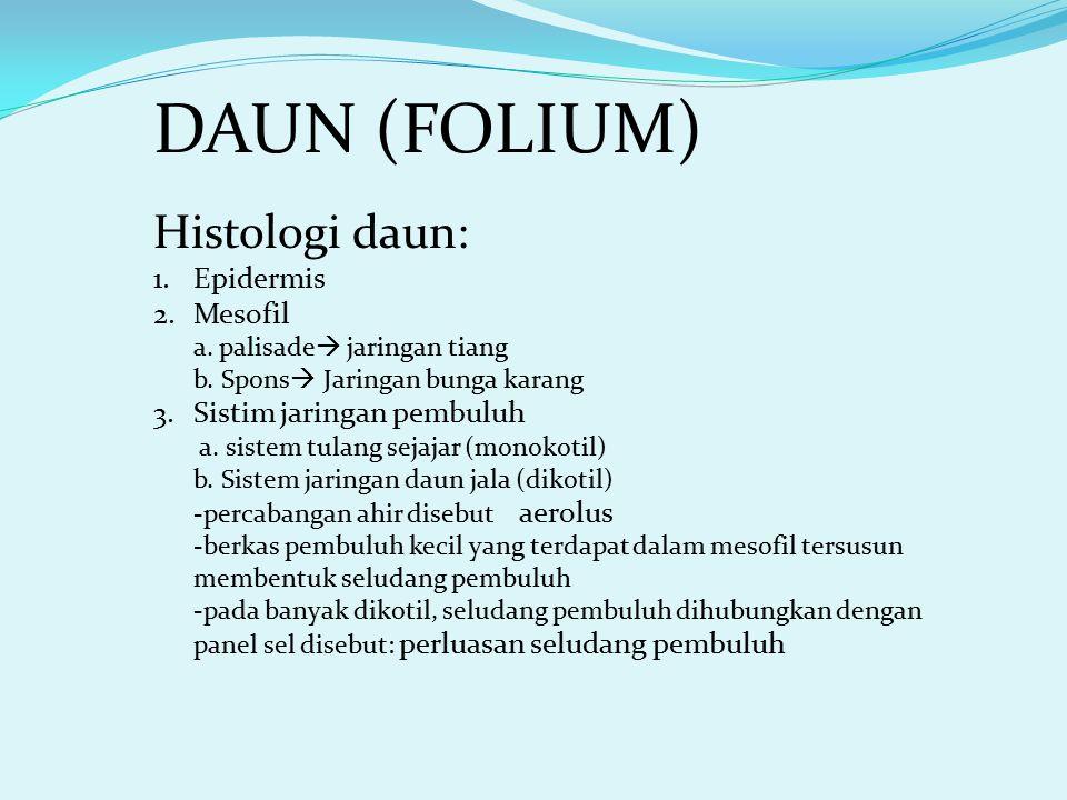 DAUN (FOLIUM) Histologi daun: 1.Epidermis 2.Mesofil a. palisade  jaringan tiang b. Spons  Jaringan bunga karang 3.Sistim jaringan pembuluh a. sistem