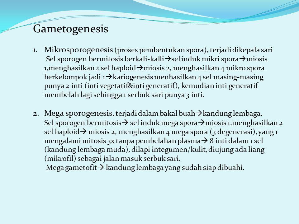 Gametogenesis 1.Mikrosporogenesis (proses pembentukan spora), terjadi dikepala sari Sel sporogen bermitosis berkali-kalli  sel induk mikri spora  mi