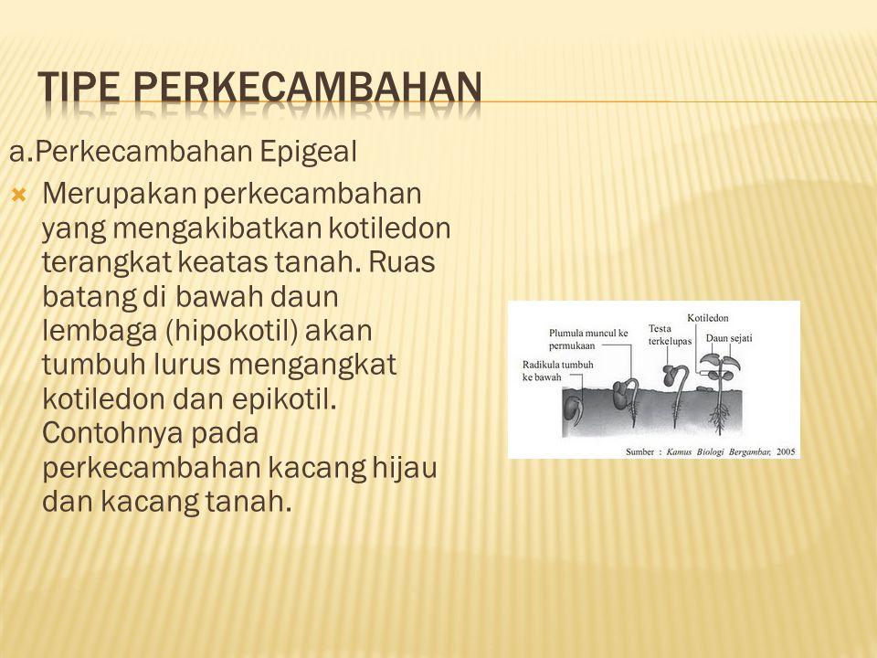 a.Perkecambahan Epigeal  Merupakan perkecambahan yang mengakibatkan kotiledon terangkat keatas tanah.