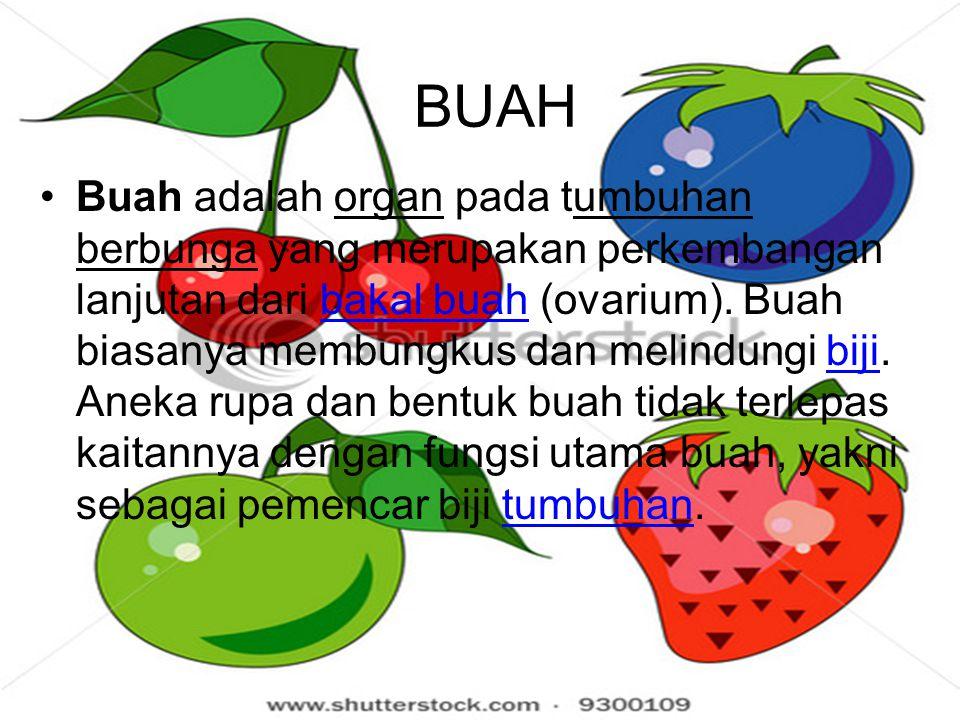 BUAH Buah adalah organ pada tumbuhan berbunga yang merupakan perkembangan lanjutan dari bakal buah (ovarium).