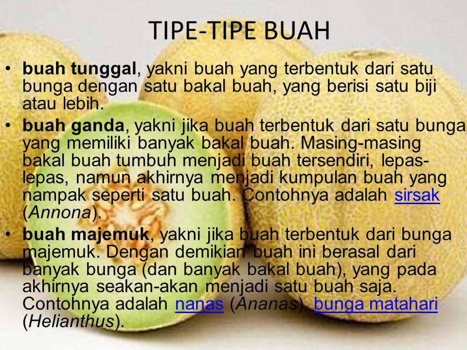 TIPE-TIPE BUAH buah tunggal, yakni buah yang terbentuk dari satu bunga dengan satu bakal buah, yang berisi satu biji atau lebih.