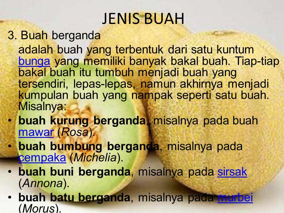 JENIS BUAH 3.