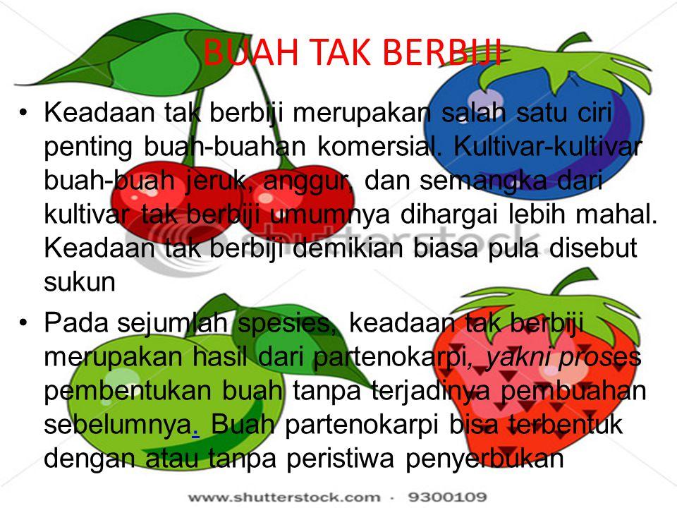 BUAH TAK BERBIJI Keadaan tak berbiji merupakan salah satu ciri penting buah-buahan komersial.