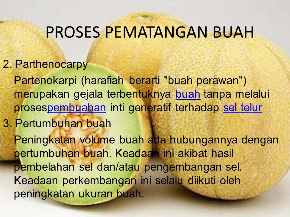 PROSES PEMATANGAN BUAH 2.