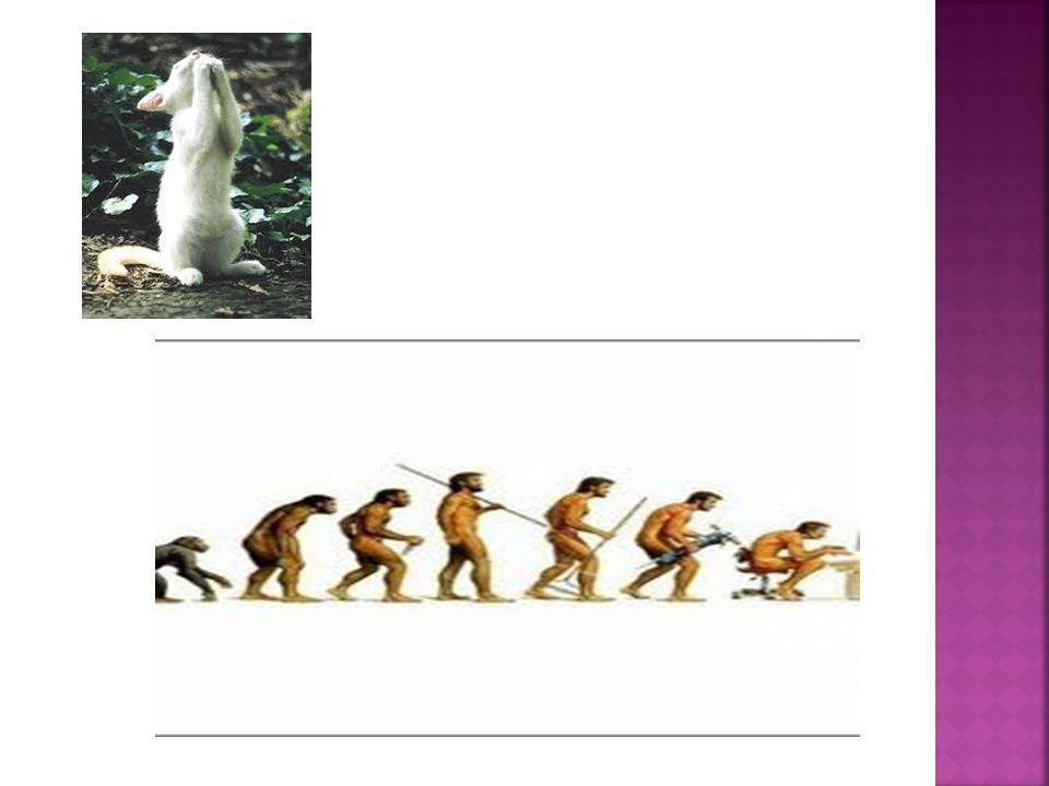 1.Perubahan alamiah (Natural Change) 2. Perubahan terencana (Planned Change) 3.