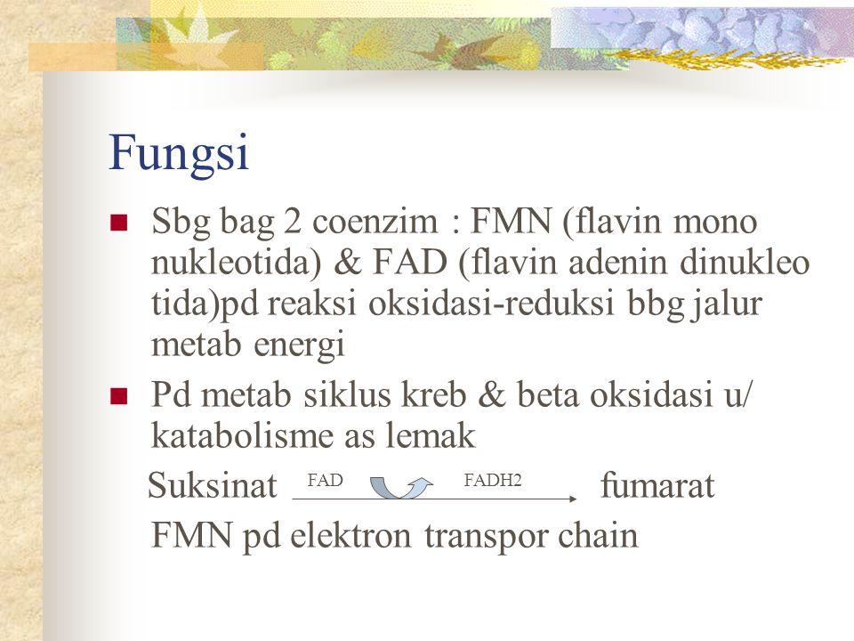 Fungsi Sbg bag 2 coenzim : FMN (flavin mono nukleotida) & FAD (flavin adenin dinukleo tida)pd reaksi oksidasi-reduksi bbg jalur metab energi Pd metab
