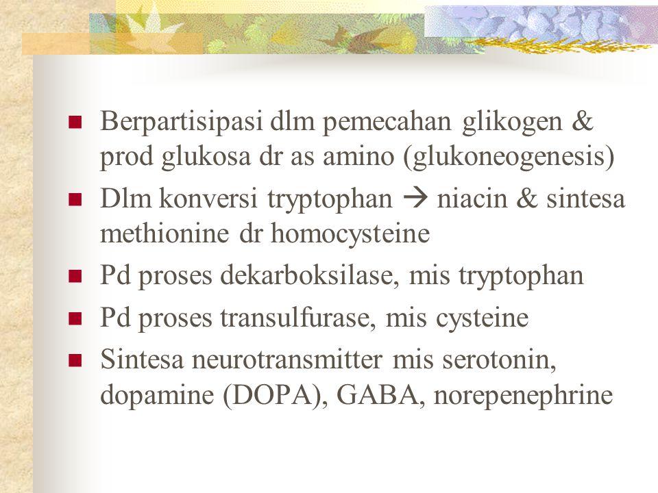 Berpartisipasi dlm pemecahan glikogen & prod glukosa dr as amino (glukoneogenesis) Dlm konversi tryptophan  niacin & sintesa methionine dr homocystei
