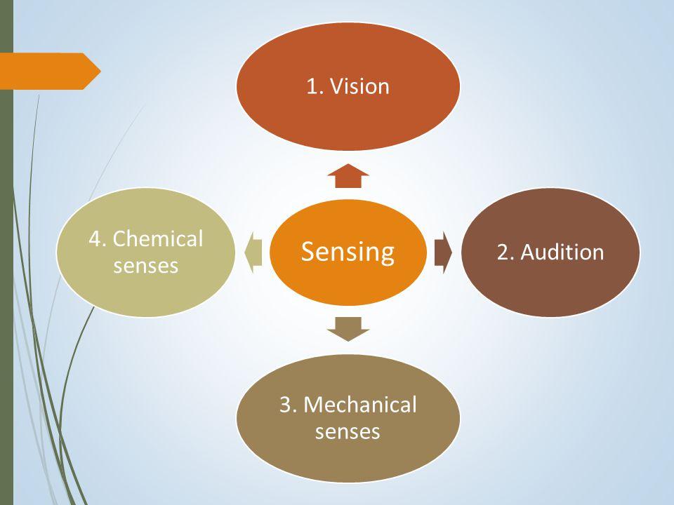 Sensing 1. Vision2. Audition 3. Mechanical senses 4. Chemical senses