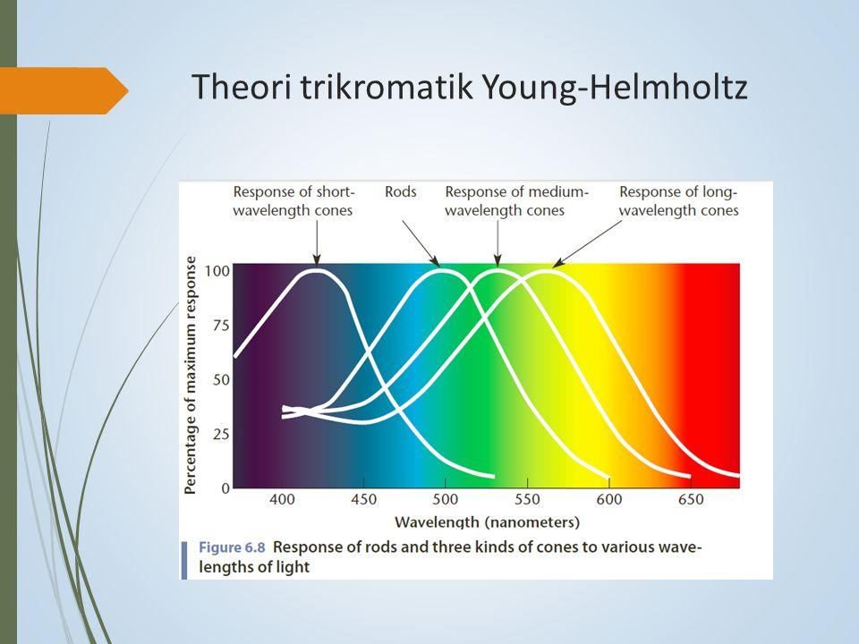 Theori trikromatik Young-Helmholtz