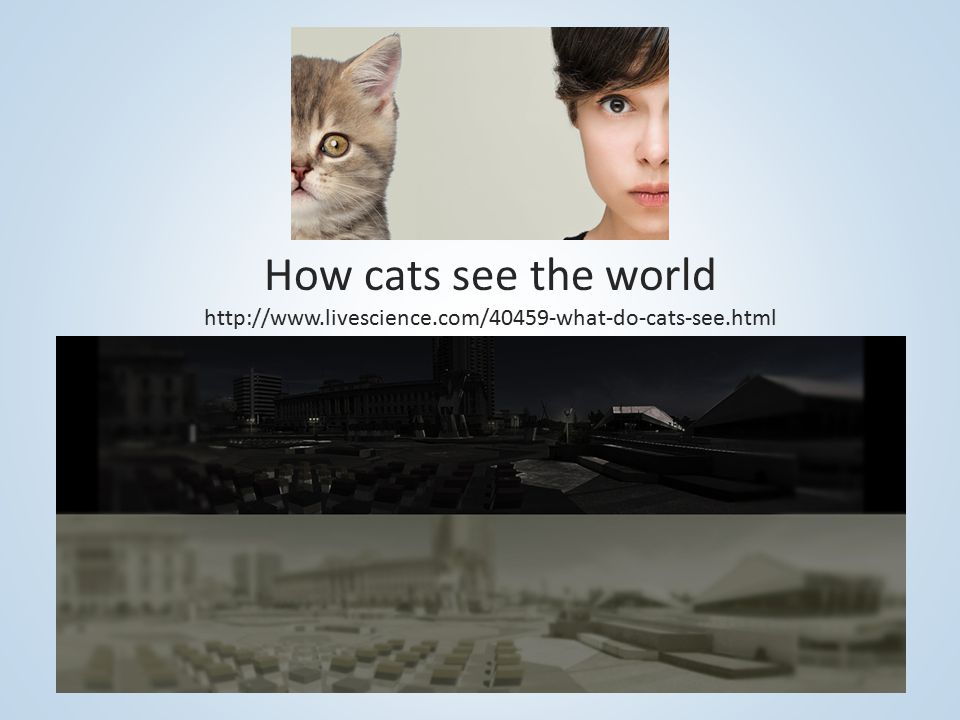 How cats see the world http://www.livescience.com/40459-what-do-cats-see.html