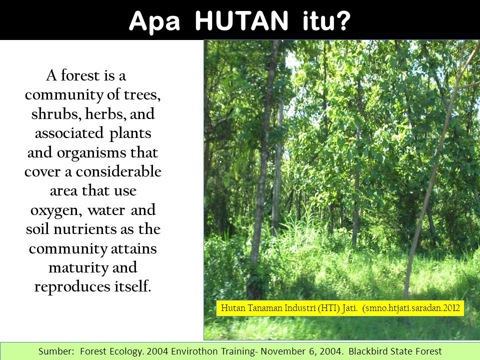 A forest is a community of trees, shrubs, herbs, and associated plants and organisms that cover a considerable area that use oxygen, water and soil nutrients as the community attains maturity and reproduces itself.