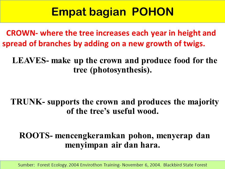 Empat bagian POHON CROWN- where the tree increases each year in height and spread of branches by adding on a new growth of twigs.