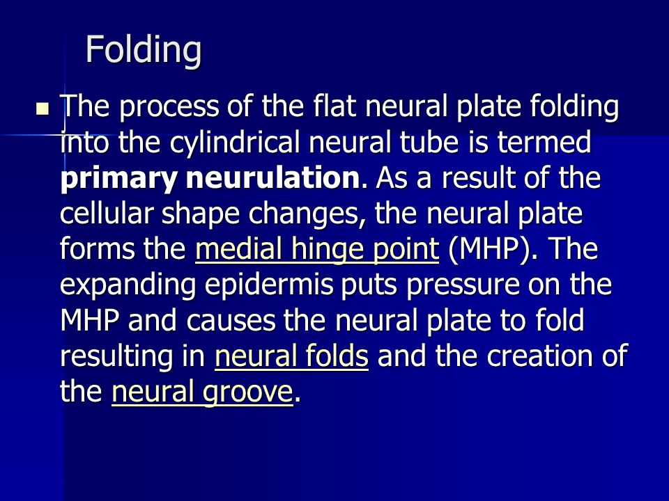 Folding The process of the flat neural plate folding into the cylindrical neural tube is termed primary neurulation.