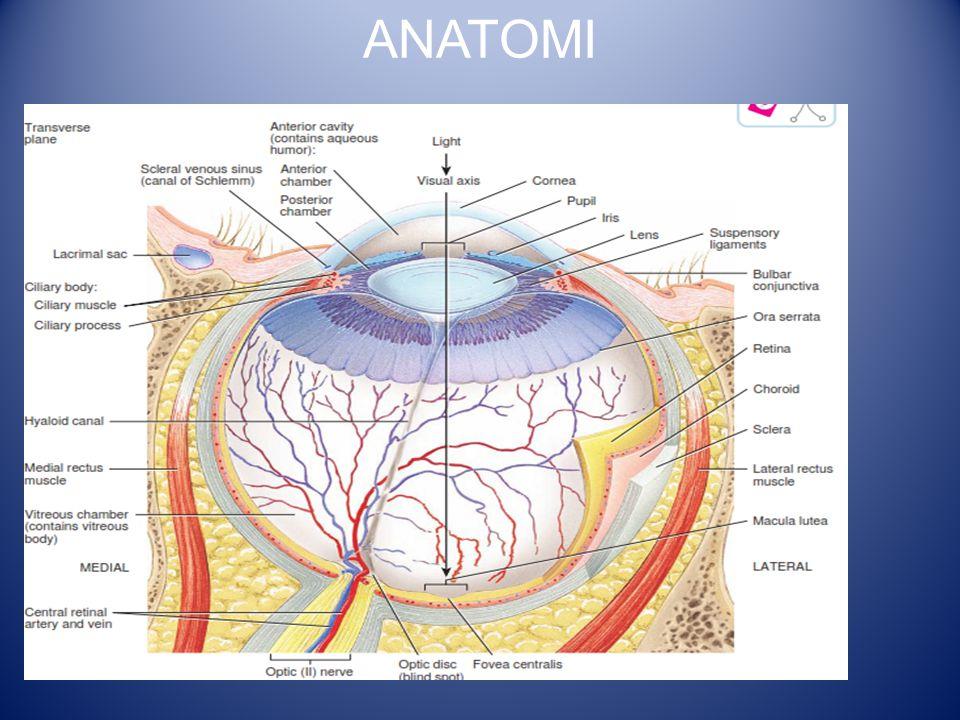 Ablasio Retina Terpisahnya lapisan neurosensoris retina (sel kerucut dan sel batang) dari lapisan epitelium berpigmen.