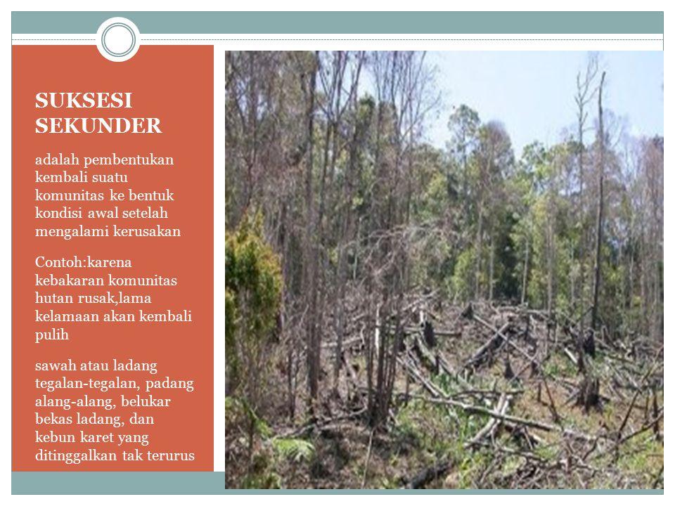 SUKSESI SEKUNDER adalah pembentukan kembali suatu komunitas ke bentuk kondisi awal setelah mengalami kerusakan Contoh:karena kebakaran komunitas hutan