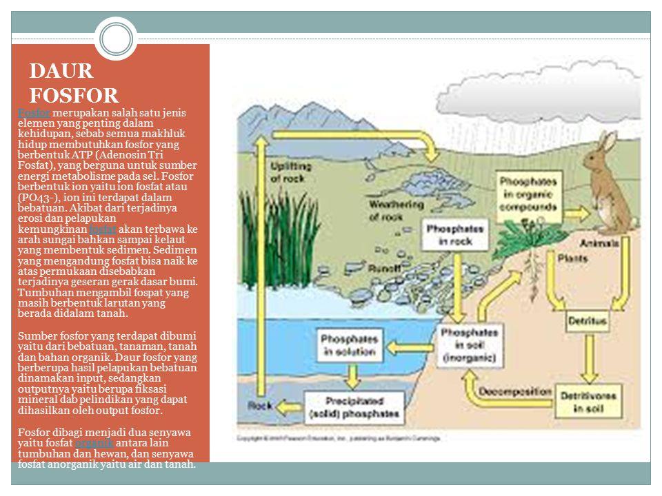 DAUR FOSFOR FosforFosfor merupakan salah satu jenis elemen yang penting dalam kehidupan, sebab semua makhluk hidup membutuhkan fosfor yang berbentuk A