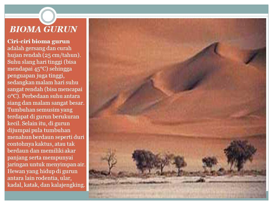 BIOMA GURUN Ciri-ciri bioma gurun adalah gersang dan curah hujan rendah (25 cm/tahun). Suhu slang hari tinggi (bisa mendapai 45°C) sehingga penguapan