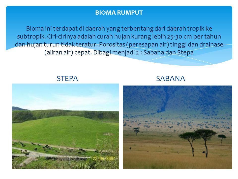 BIOMA RUMPUT Bioma ini terdapat di daerah yang terbentang dari daerah tropik ke subtropik. Ciri-cirinya adalah curah hujan kurang lebih 25-30 cm per t