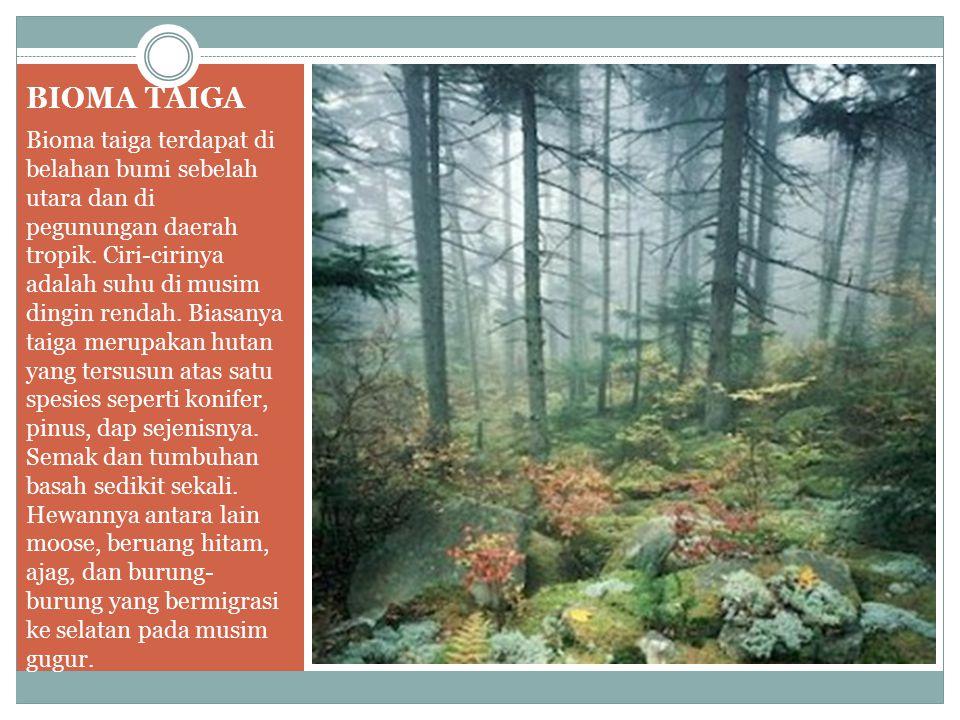 BIOMA TAIGA Bioma taiga terdapat di belahan bumi sebelah utara dan di pegunungan daerah tropik. Ciri-cirinya adalah suhu di musim dingin rendah. Biasa