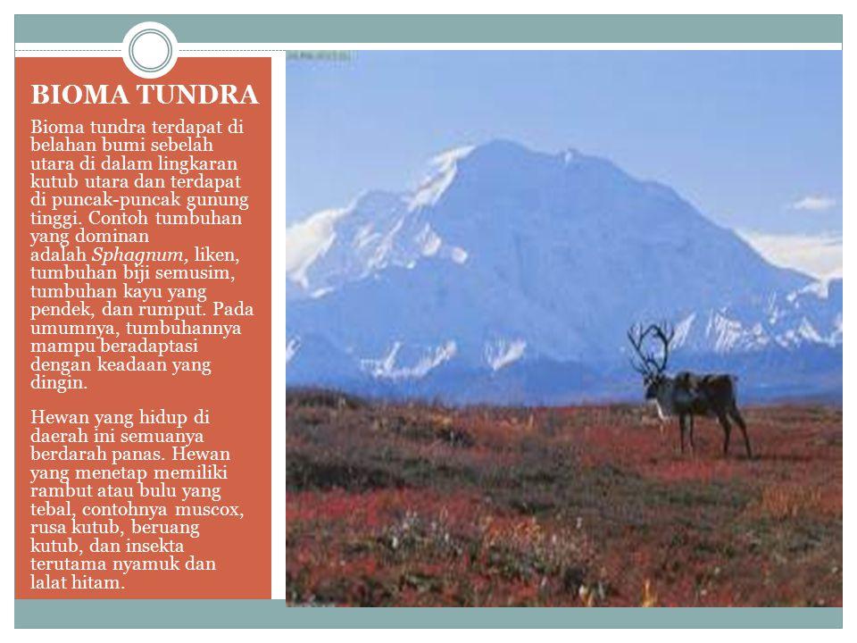 BIOMA TUNDRA Bioma tundra terdapat di belahan bumi sebelah utara di dalam lingkaran kutub utara dan terdapat di puncak-puncak gunung tinggi. Contoh tu