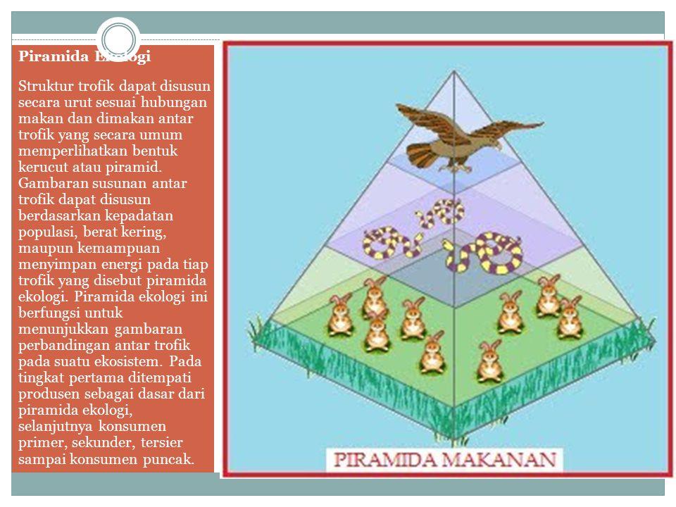 Piramida Ekologi Struktur trofik dapat disusun secara urut sesuai hubungan makan dan dimakan antar trofik yang secara umum memperlihatkan bentuk keruc