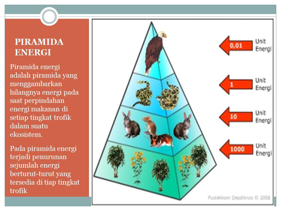 PIRAMIDA ENERGI Piramida energi adalah piramida yang menggambarkan hilangnya energi pada saat perpindahan energi makanan di setiap tingkat trofik dala