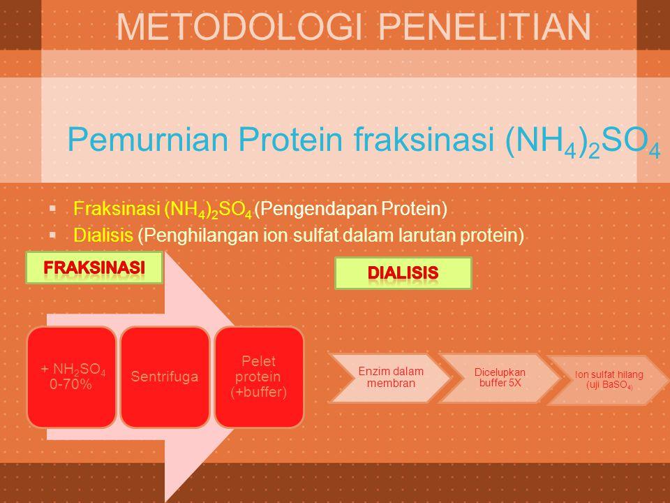 Pemurnian Protein fraksinasi (NH 4 ) 2 SO 4 METODOLOGI PENELITIAN  Fraksinasi (NH 4 ) 2 SO 4 (Pengendapan Protein)  Dialisis (Penghilangan ion sulfa