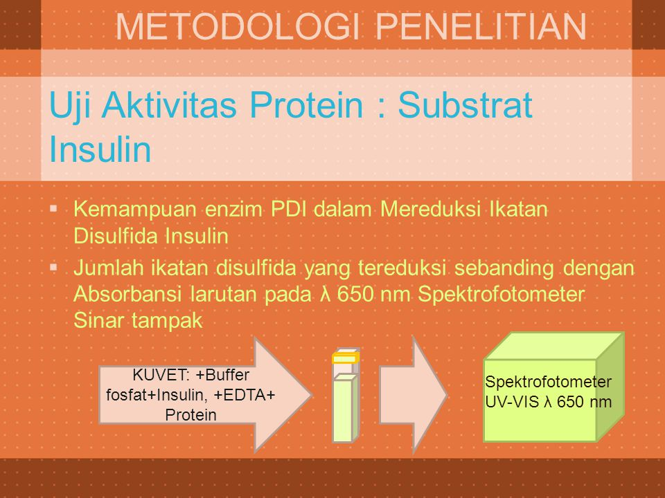 KUVET: +Buffer fosfat+Insulin, +EDTA+ Protein Spektrofotometer UV-VIS λ 650 nm Uji Aktivitas Protein : Substrat Insulin  Kemampuan enzim PDI dalam Me