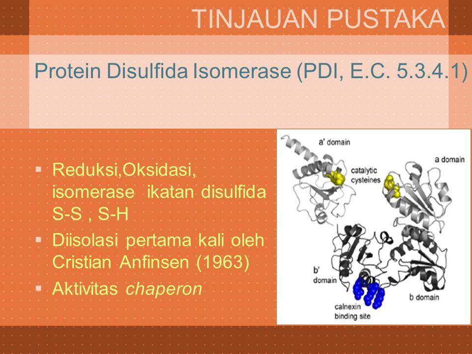Protein Disulfida Isomerase (PDI, E.C. 5.3.4.1)  Reduksi,Oksidasi, isomerase ikatan disulfida S-S, S-H  Diisolasi pertama kali oleh Cristian Anfinse