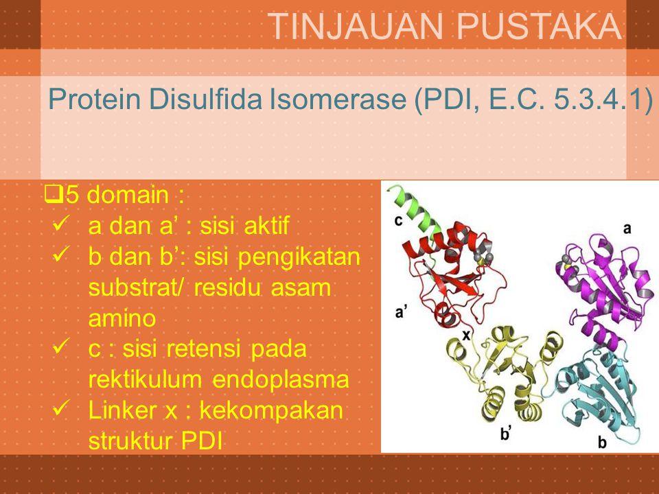  5 domain : a dan a' : sisi aktif b dan b': sisi pengikatan substrat/ residu asam amino c : sisi retensi pada rektikulum endoplasma Linker x : kekomp