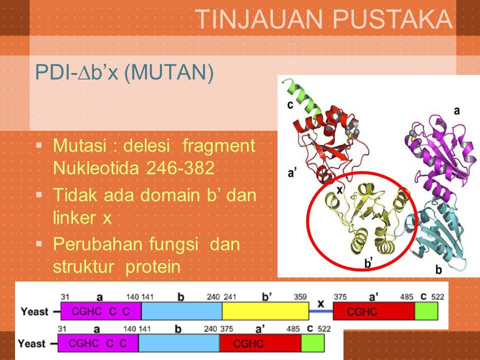  Mutasi : delesi fragment Nukleotida 246-382  Tidak ada domain b' dan linker x  Perubahan fungsi dan struktur protein TINJAUAN PUSTAKA PDI-∆b'x (MU