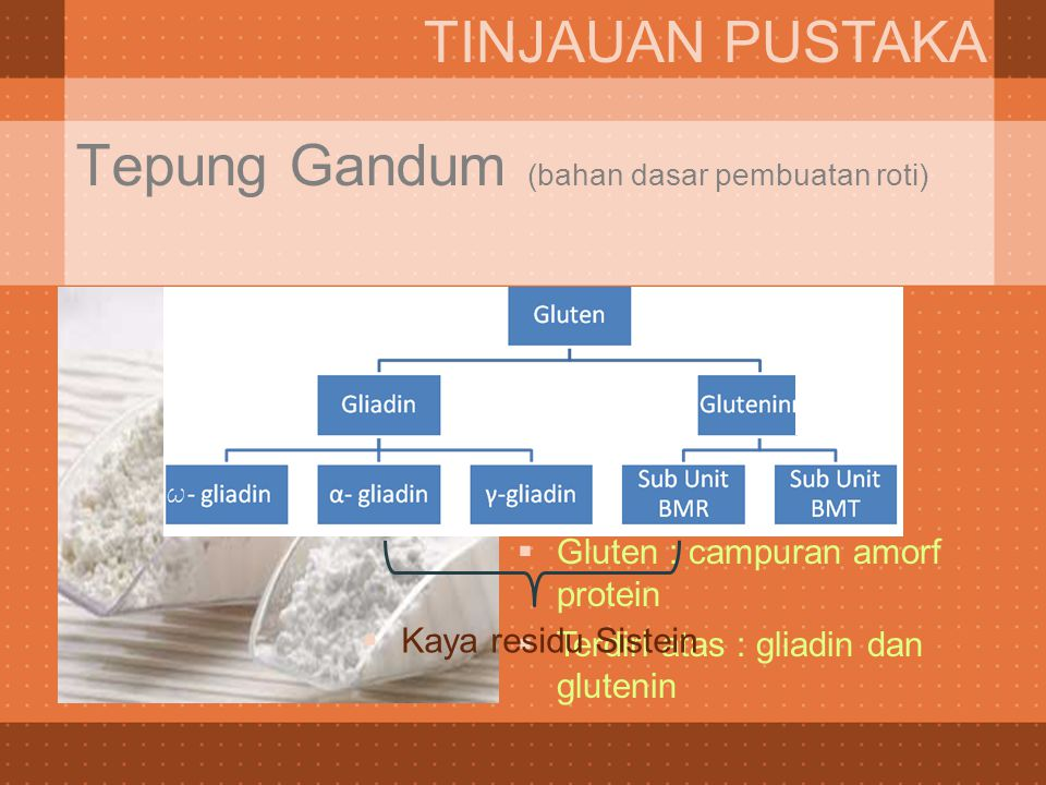 Tepung Gandum (bahan dasar pembuatan roti) TINJAUAN PUSTAKA  80% protein gluten  Gluten : campuran amorf protein  Terdiri atas : gliadin dan gluten