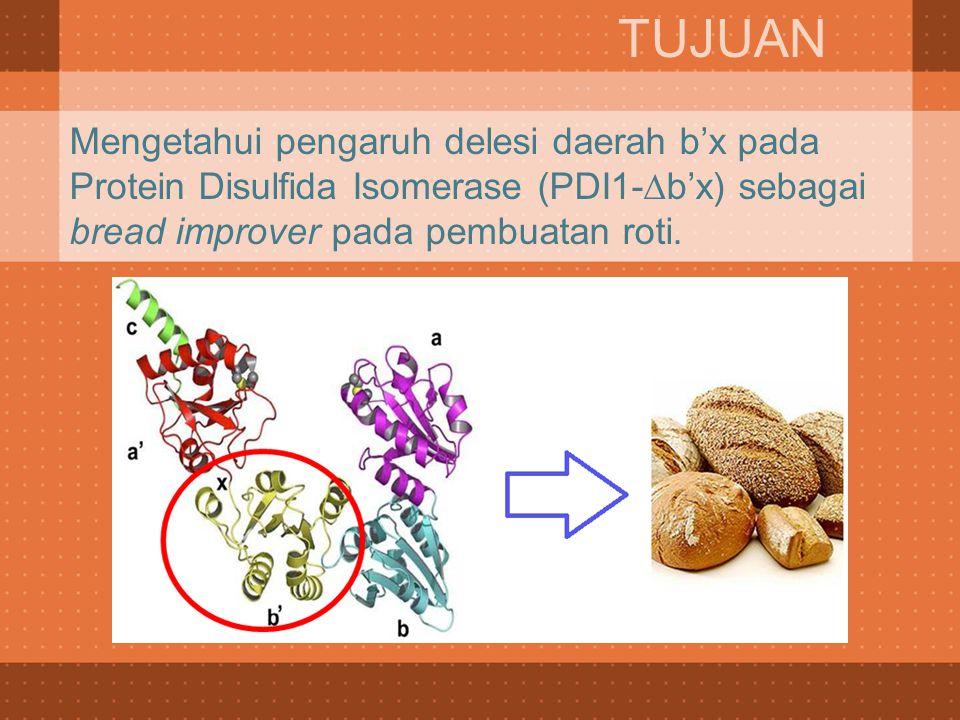 Mengetahui pengaruh delesi daerah b'x pada Protein Disulfida Isomerase (PDI1-∆b'x) sebagai bread improver pada pembuatan roti. TUJUAN