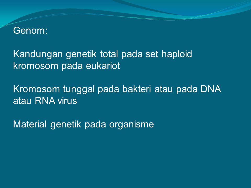 Genom bakteri terdiri dari kromosom sirkular Terkondensasi dengan cara supercoiling dan looping membentuk badan nukleoid yang tersusun secara rapat Kromosom bereplikasi di dalam sel dan sel membelah secara biner