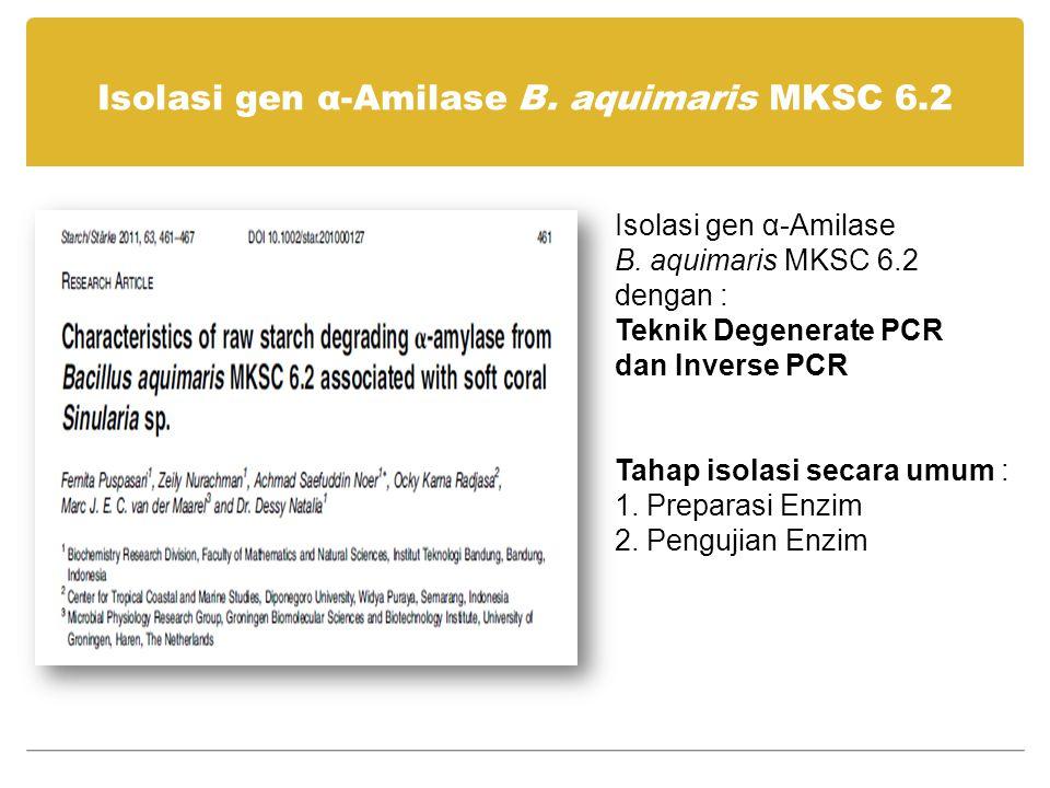 Isolasi gen α-Amilase B. aquimaris MKSC 6.2 Isolasi gen α-Amilase B. aquimaris MKSC 6.2 dengan : Teknik Degenerate PCR dan Inverse PCR Tahap isolasi s
