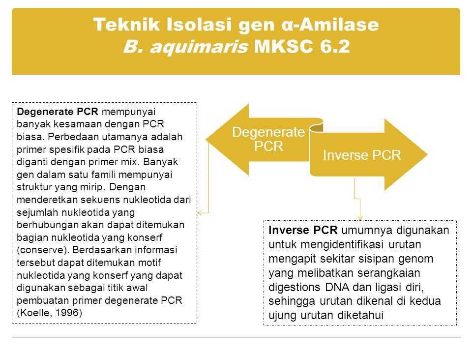 Teknik Isolasi gen α-Amilase B. aquimaris MKSC 6.2 Degenerate PCR Inverse PCR Degenerate PCR mempunyai banyak kesamaan dengan PCR biasa. Perbedaan uta
