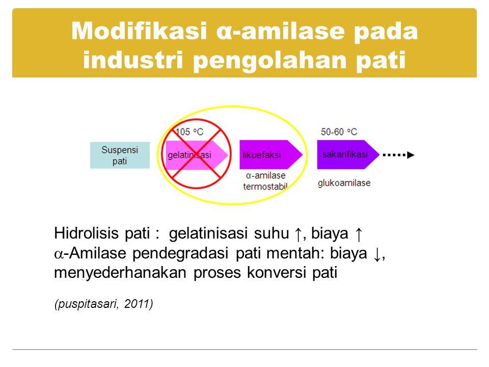 Modifikasi α-amilase pada industri pengolahan pati Hidrolisis pati : gelatinisasi suhu ↑, biaya ↑  -Amilase pendegradasi pati mentah: biaya ↓, menyed